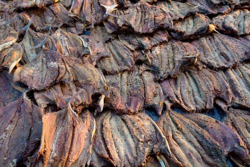 Pescados secados de Colombo Fish Market foto de archivo libre de regalías
