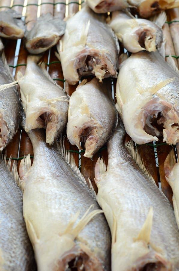 Pescados secados del pájaro de mal agüero de Sodier (microlepis de Boesemania) fotografía de archivo