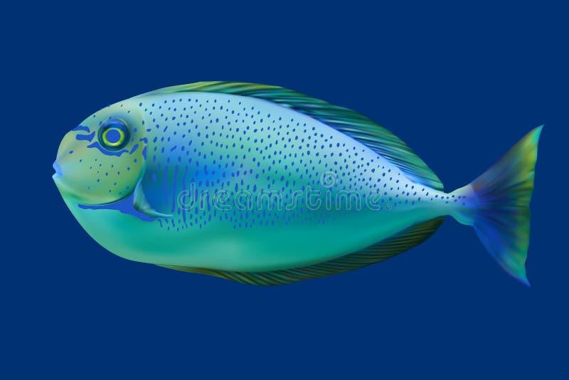 Pescados tropicales azules. ilustración del vector