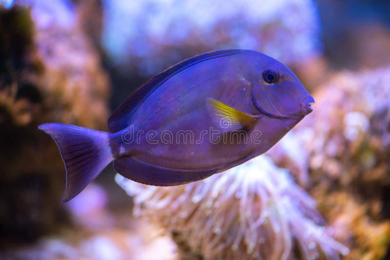 Pescados tropicales coloridos imagenes de archivo