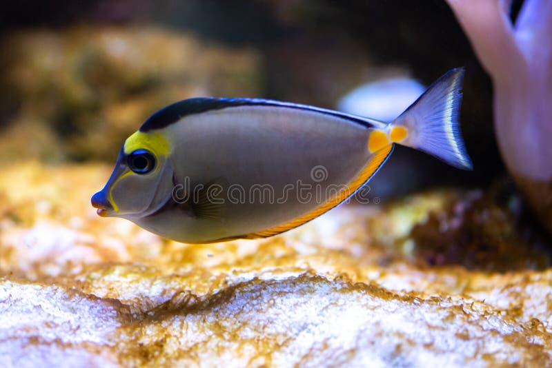 Pescados tropicales coloridos foto de archivo libre de regalías