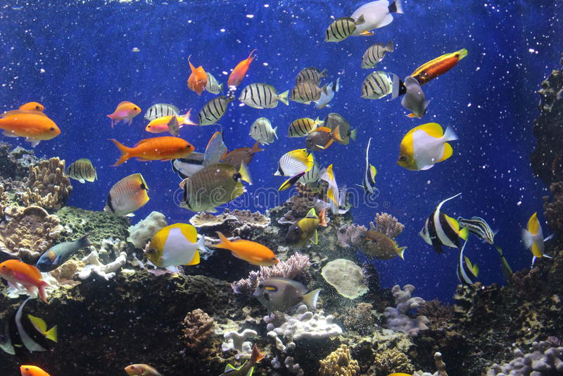 Pescados tropicales coloridos fotos de archivo