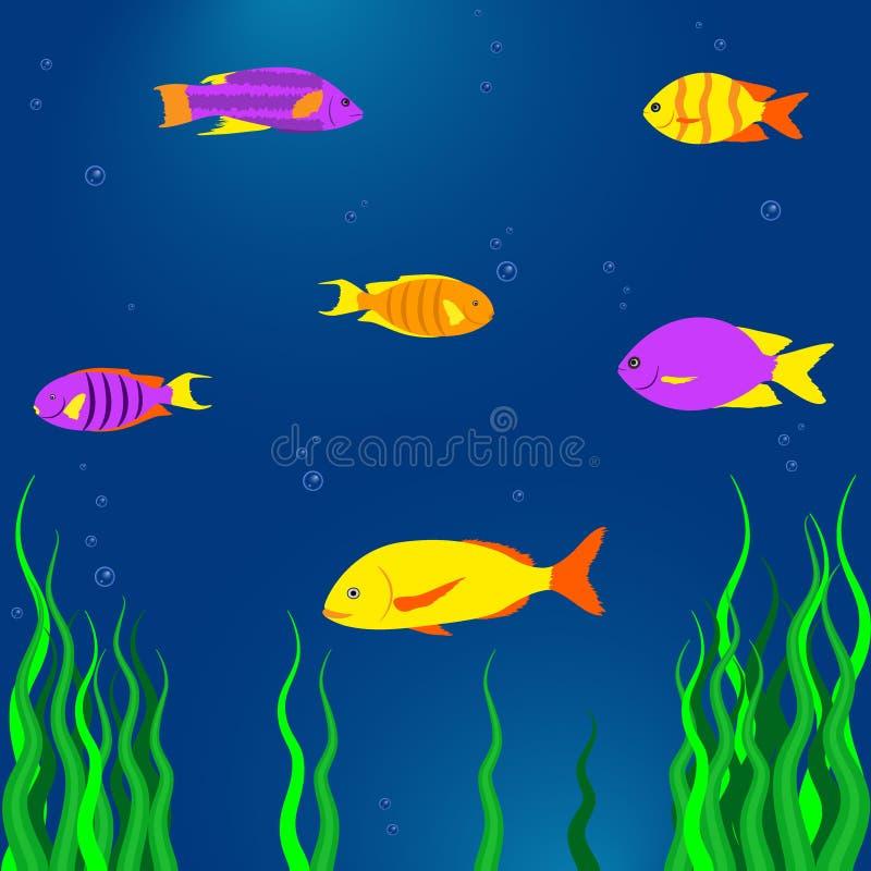 Pescados tropicales coloridos en el mar, vida subacuática, algas marinas Ejemplo del vector en estilo plano de la historieta stock de ilustración