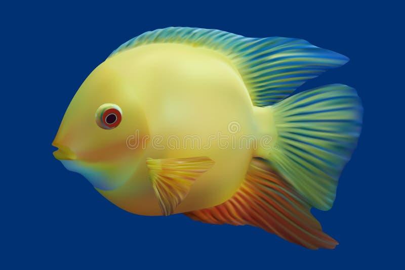 Pescados tropicales de oro. stock de ilustración