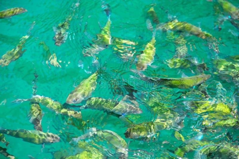 Pescados tropicales en agua imágenes de archivo libres de regalías