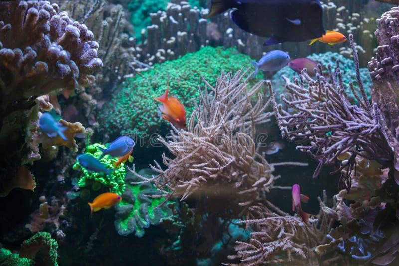 Pescados tropicales en la gran barrera de coral fotografía de archivo libre de regalías