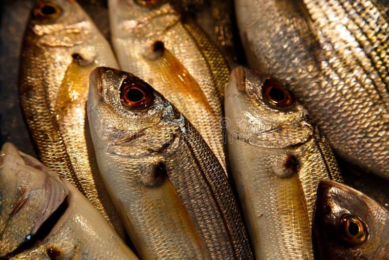Pescados a vender imagen de archivo