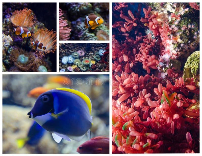Pescados y arrecifes de coral tropicales Conjunto de cuadros fotografía de archivo