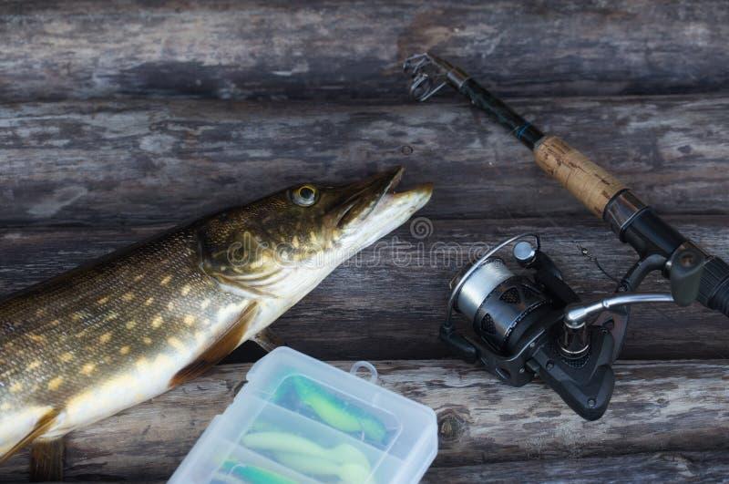 Pescados y caña de pescar de agua dulce del lucio europeo con el carrete que miente en fondo de madera del vintage foto de archivo libre de regalías