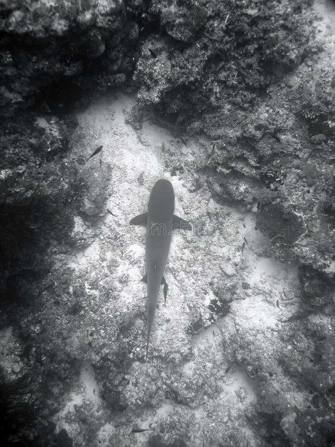 Pescados y filón coralino fotos de archivo