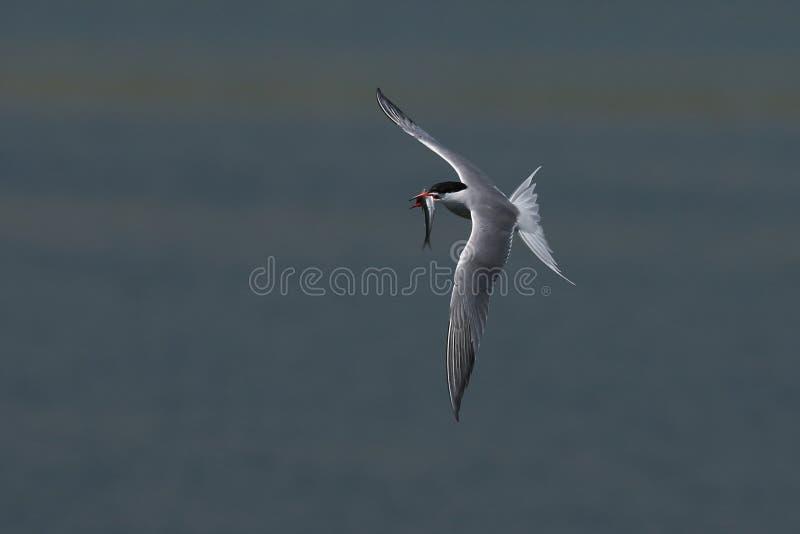 Pescados y pájaro foto de archivo libre de regalías