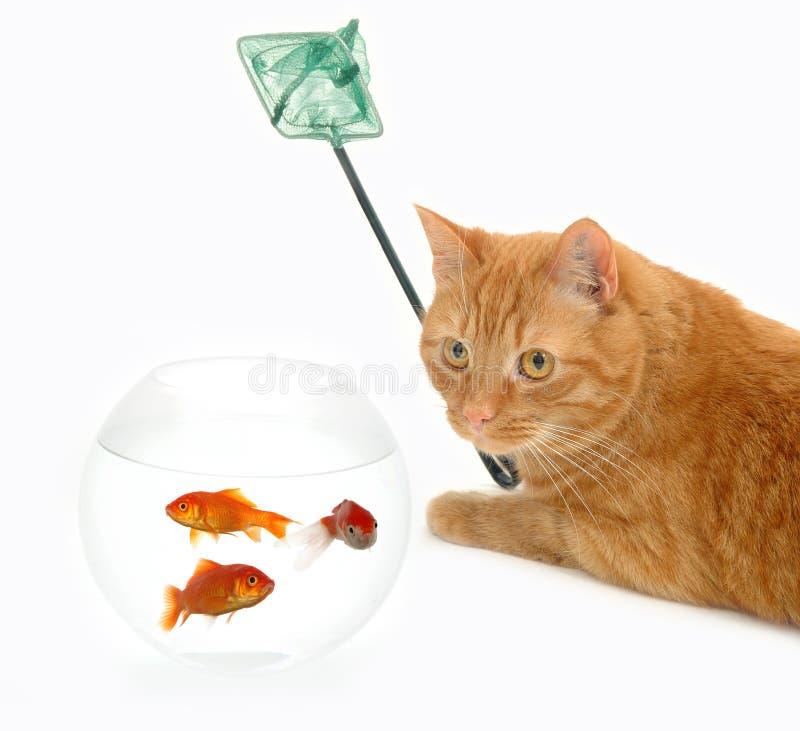 Pescados y red del gato imagenes de archivo