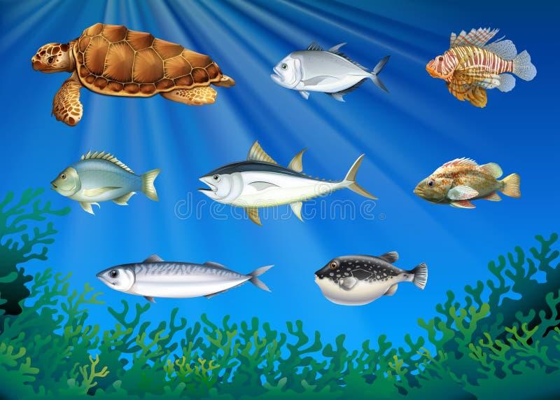 Pescados y tortuga de mar debajo del mar ilustración del vector