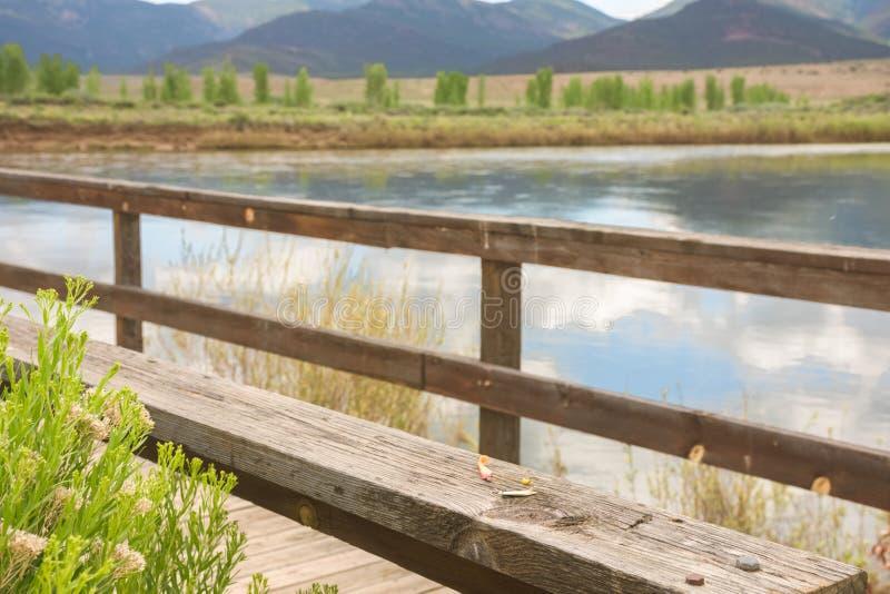Pescando el muelle a lo largo de la impulsión de la fauna en marrones parquee a principios de verano fotos de archivo libres de regalías