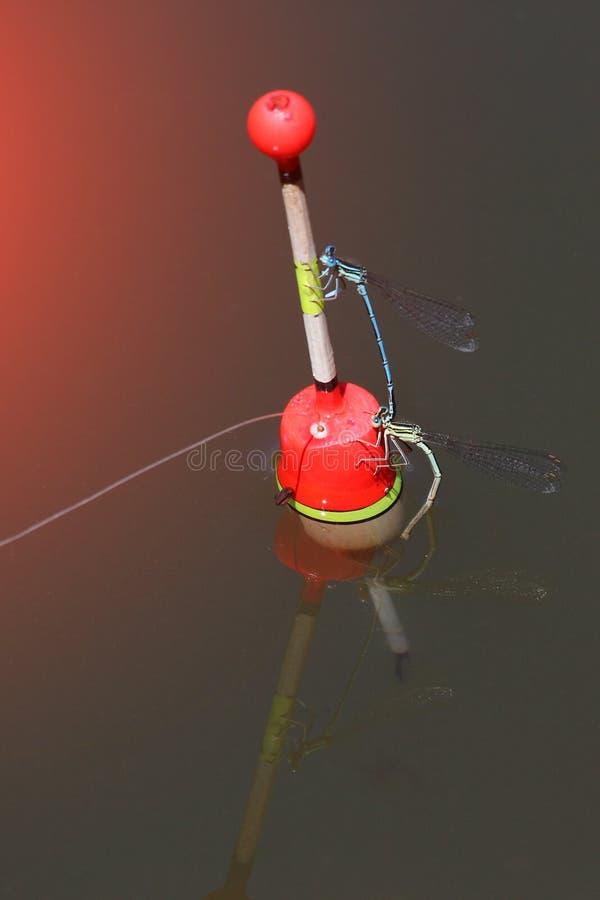 Pescando o flutuador na água com libélula fotos de stock royalty free