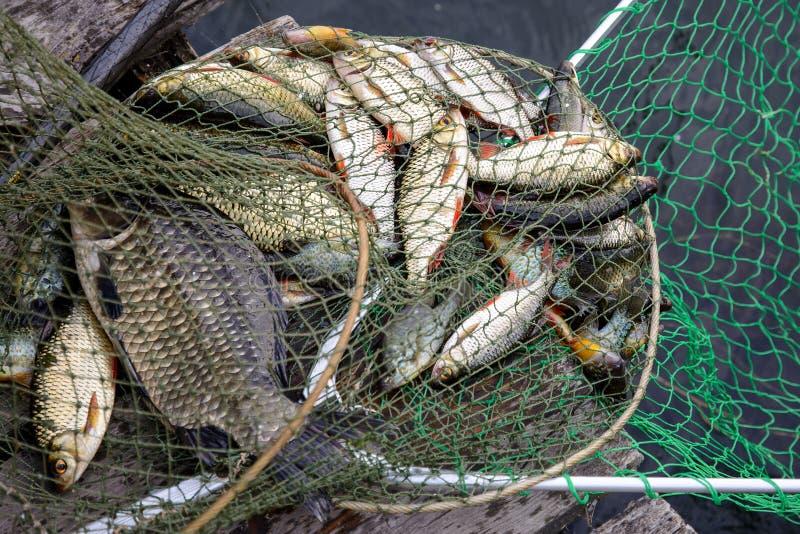 Pescando, pescados crudos imagen de archivo libre de regalías