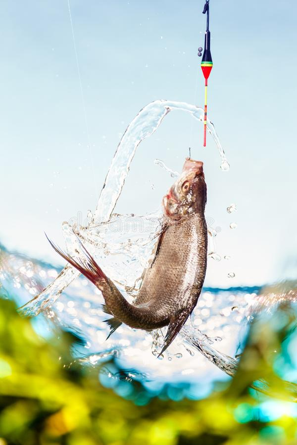 Pescando su un lago in un giorno di estate soleggiato Canne da pesca del galleggiante, orata immagini stock libere da diritti