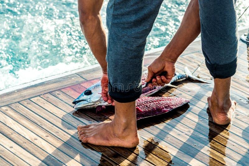 Pescando y escalfando, el pescador corta y despeja el atún grande cogido Marco horizontal fotografía de archivo libre de regalías