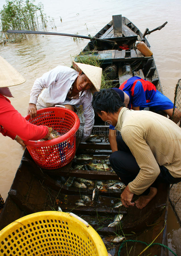 Pescatore asiatico, tri pesce di un lago, fiume fotografia stock