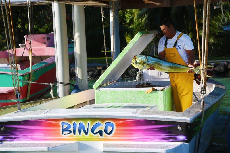 Pescatore che mostra il pesce di dorado preso appena fotografia stock libera da diritti
