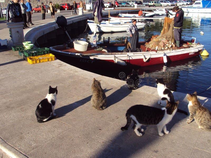 Pescatori e gatti a Cavtat, Croazia immagine stock