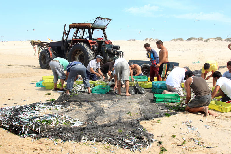 Pescatori e loro la cattura dei pesci, Portogallo immagine stock libera da diritti