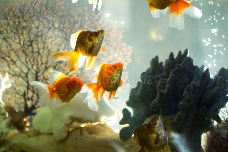 Pesce in acquario immagine stock
