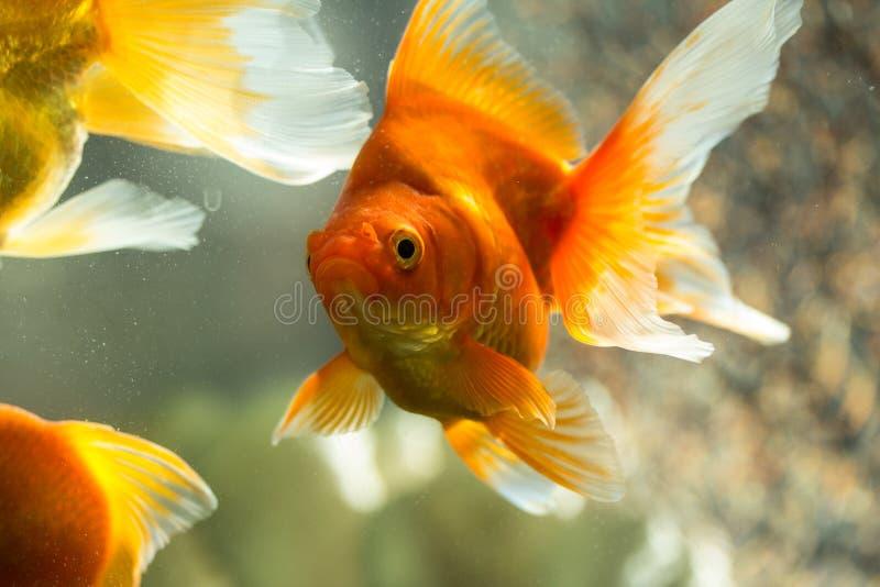 Pesce in acquario fotografia stock libera da diritti