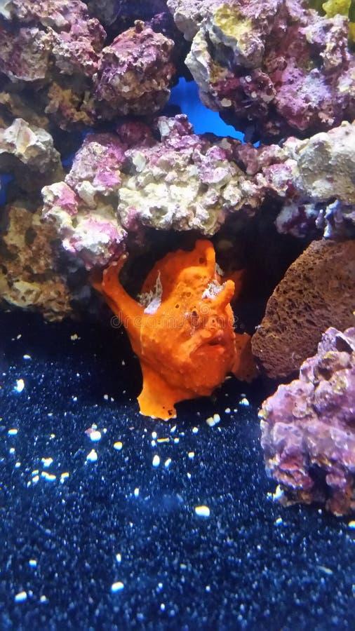 Pesce arancio fotografia stock