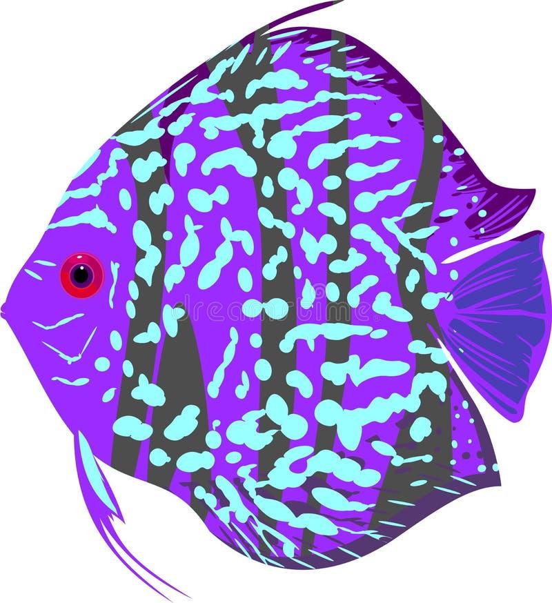 Pesce blu di disco del leopardo illustrazione vettoriale