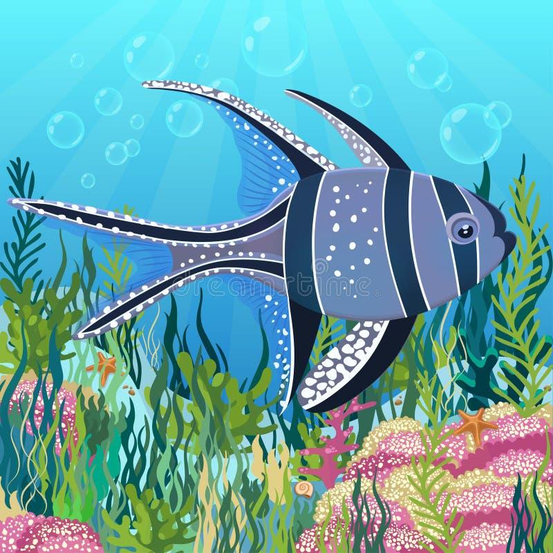 Pesce cardinale di Banggai al fondo del mare con le alghe variopinte che disegnano, fondo subacqueo del mondo Pesce nero viola co royalty illustrazione gratis