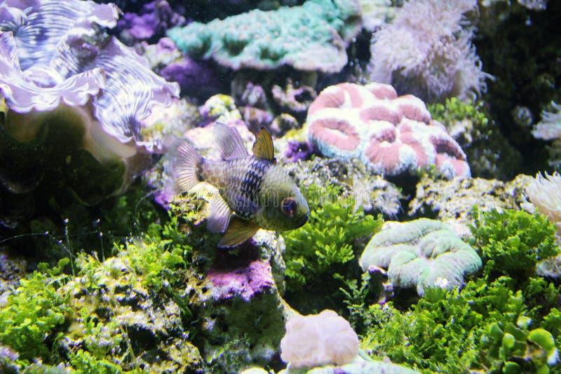 Pesce contro Coral Reef fotografia stock libera da diritti
