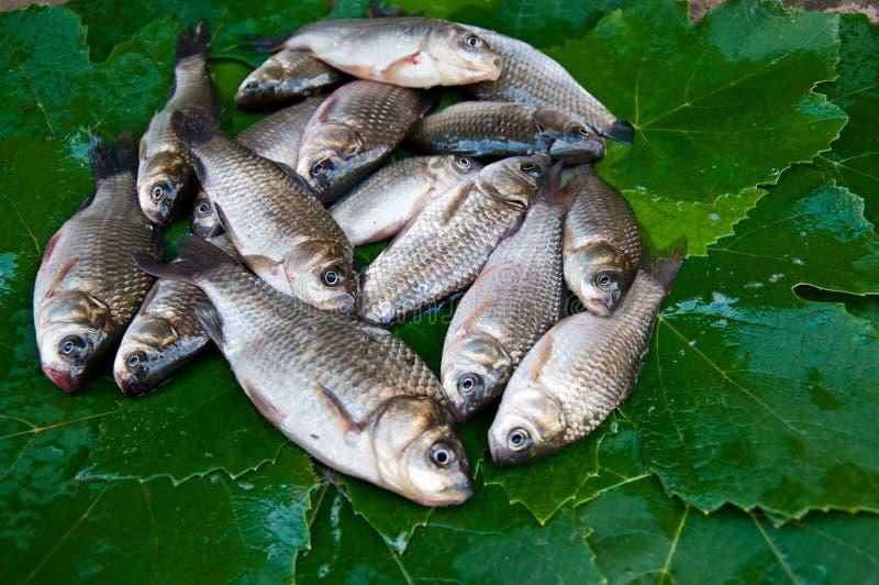 Pesce crudo fotografie stock