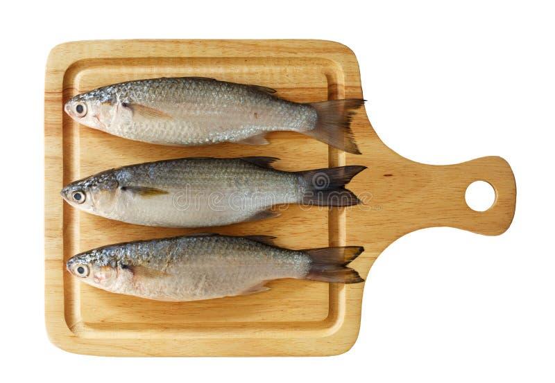 Pesce crudo della muggine fotografie stock
