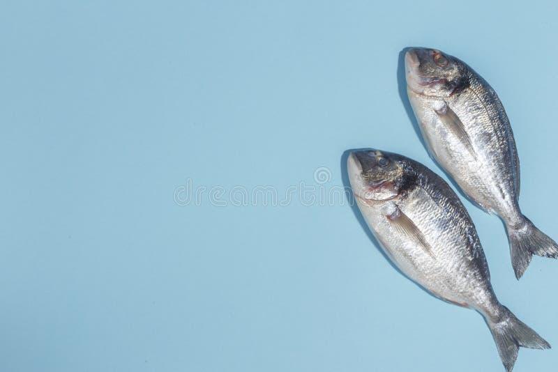 Pesce crudo di dorada con le spezie, il sale, il limone e le erbe, rosmarini su un fondo ligth-blu Vista superiore immagine stock