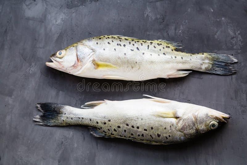Pesce crudo fresco con le spezie, limone, sale su fondo di pietra scuro Disposizione creativa fatta del pesce, vista superiore co immagine stock