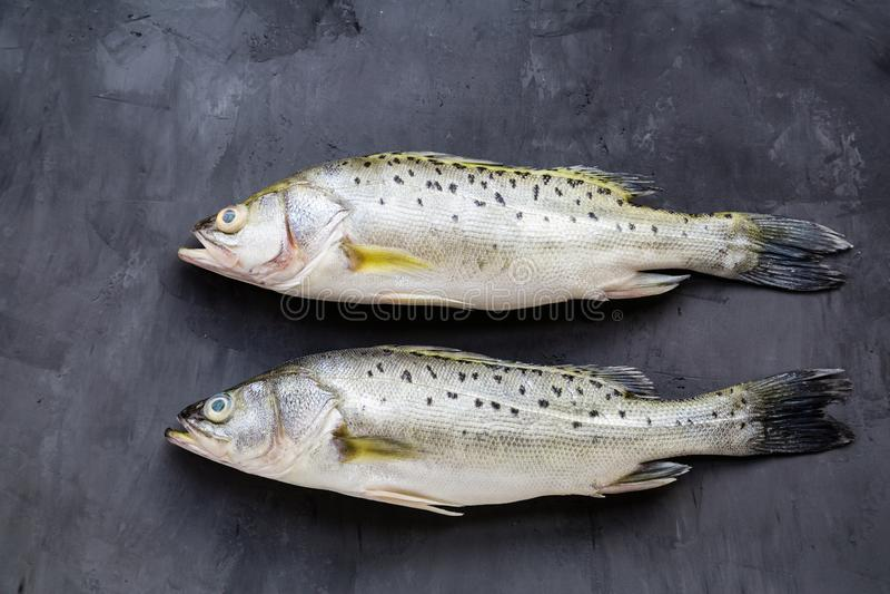 Pesce crudo fresco con le spezie, limone, sale su fondo di pietra scuro Disposizione creativa fatta del pesce, vista superiore co fotografia stock