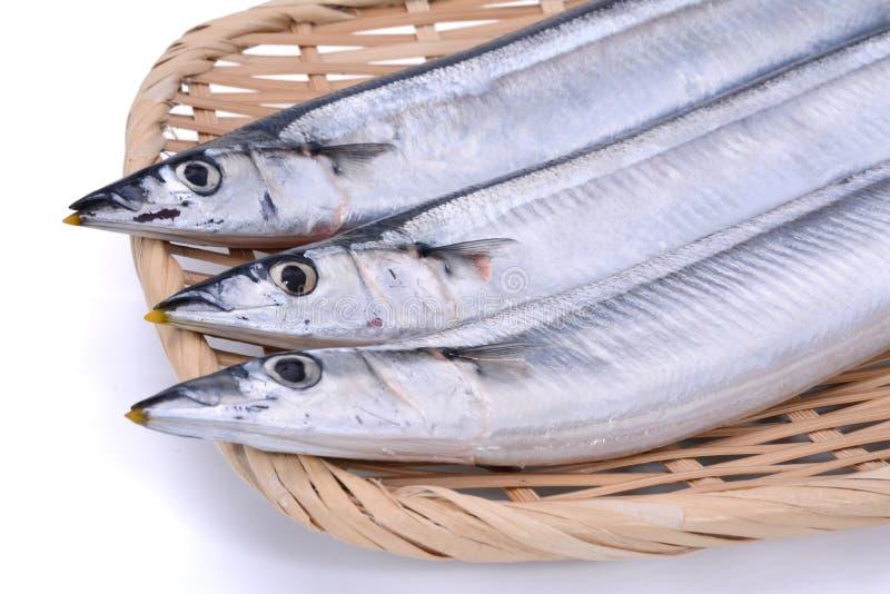 Pesce crudo fresco della mormora della sardina sul vassoio di bambù nel backgroun bianco fotografie stock libere da diritti