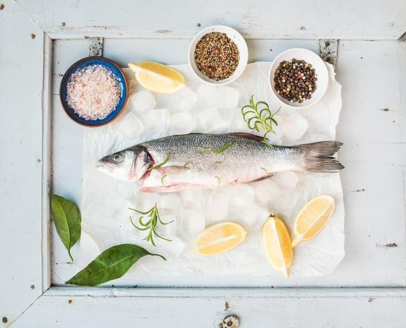 Pesce crudo fresco della spigola con il limone, le erbe, il ghiaccio e le spezie sul contesto blu rustico del bordo di legno, ori immagine stock libera da diritti