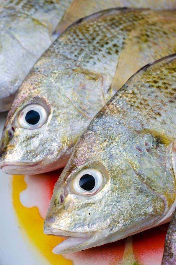 Pesce d'argento allineato fresco di grugnito per cucinare fotografia stock
