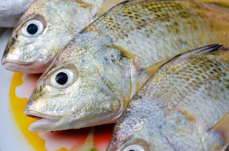 Pesce d'argento allineato fresco di grugnito per cucinare fotografia stock libera da diritti