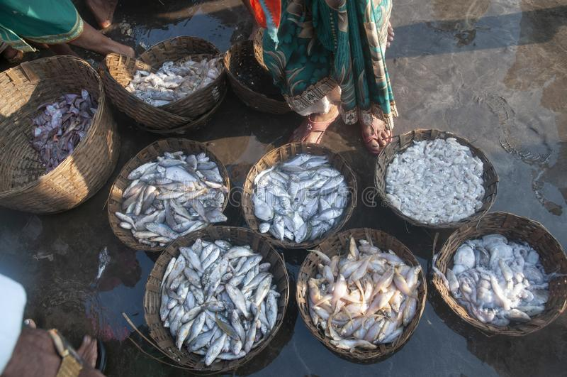 Pesce da vendere la vendita all'asta al molo del harne, Dapoli, Ratnagiri, maharashtra immagine stock libera da diritti