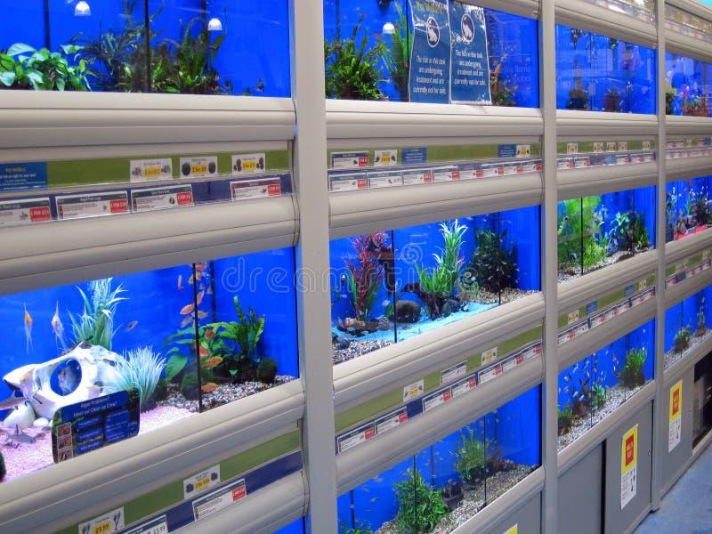 Pesce da vendere in un deposito dell'animale domestico. fotografia stock libera da diritti