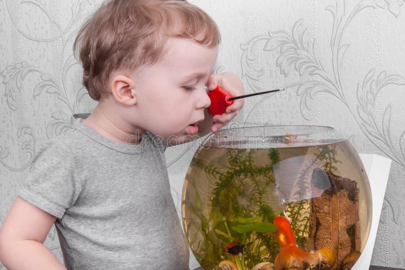 Pesce dei fermi del ragazzo in acquario fotografia stock libera da diritti