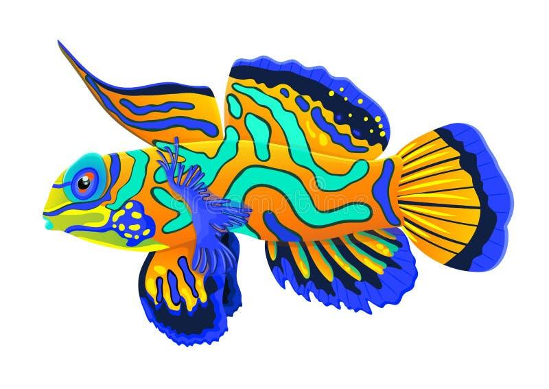 Pesce Del Mandarino Disegno Realistico Del Fumetto Piano Animale