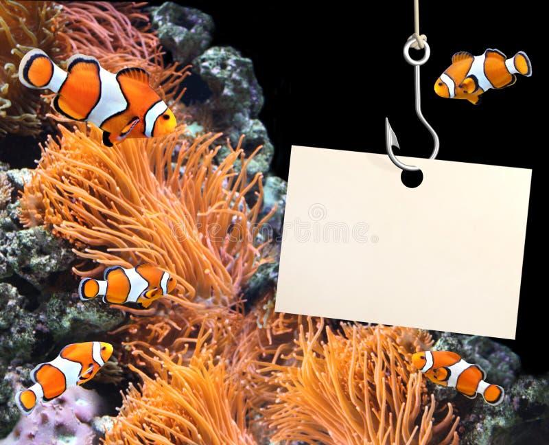 Pesce del pagliaccio e foglio vuoto di carta su un gancio di pesca immagine stock