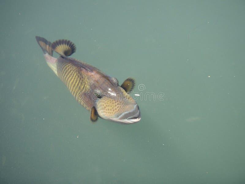 Pesce del punto di sport fotografia stock