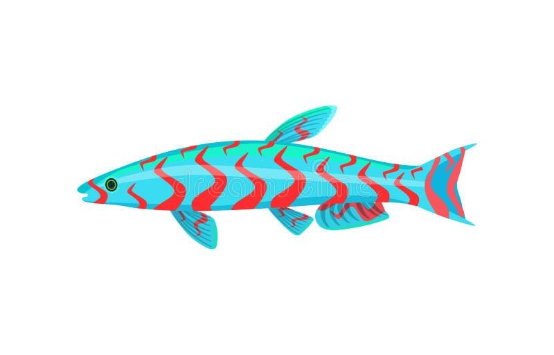 Pesce dell'acquario del mandarino isolato sul grafico bianco illustrazione vettoriale