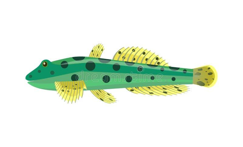 Pesce dell'acquario di Goby isolato sul grafico bianco royalty illustrazione gratis
