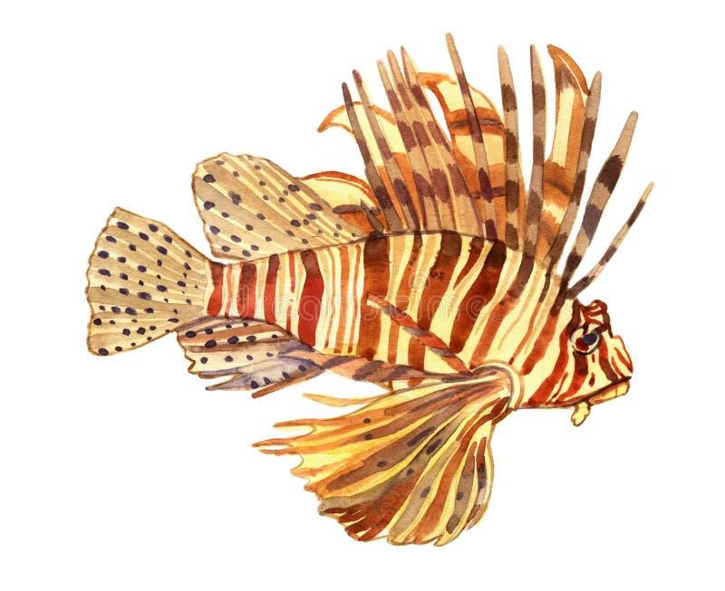 Pesce dell'acquerello Illustrazione stabilita del pesce di mare illustrazione di stock